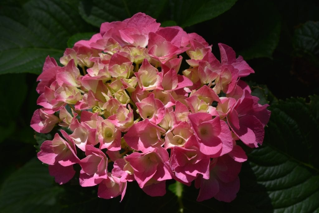 stellenberg-open-gardens-flowers