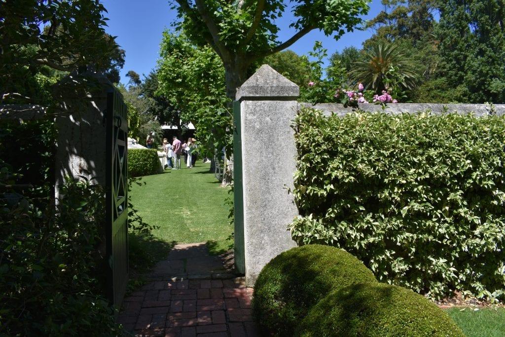 lime-garden-stellenberg-open-gardens-cape-town