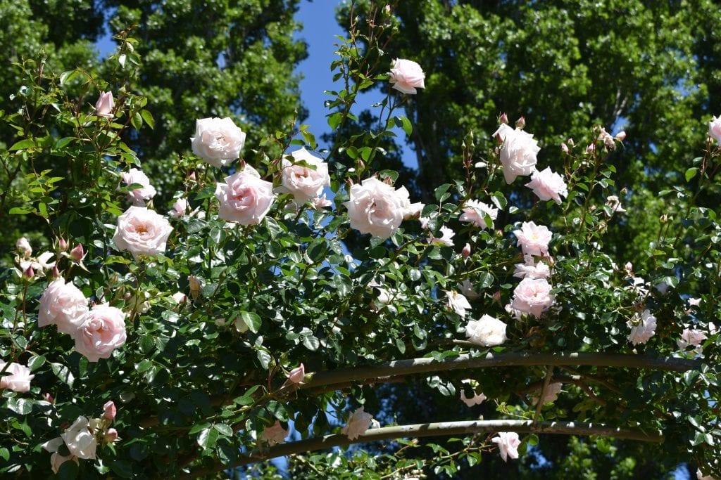 stellenberg-open-gardens-2019