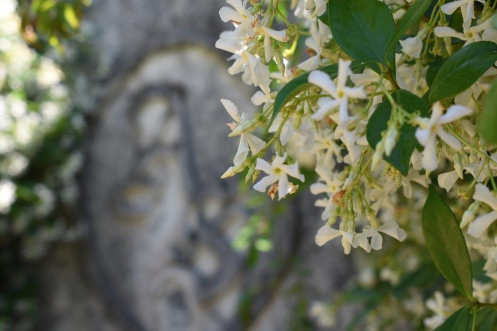 stellenberg-open-gardens