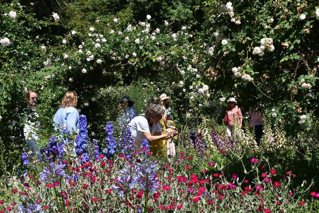 stellenberg-open-gardens-cape-town-garden
