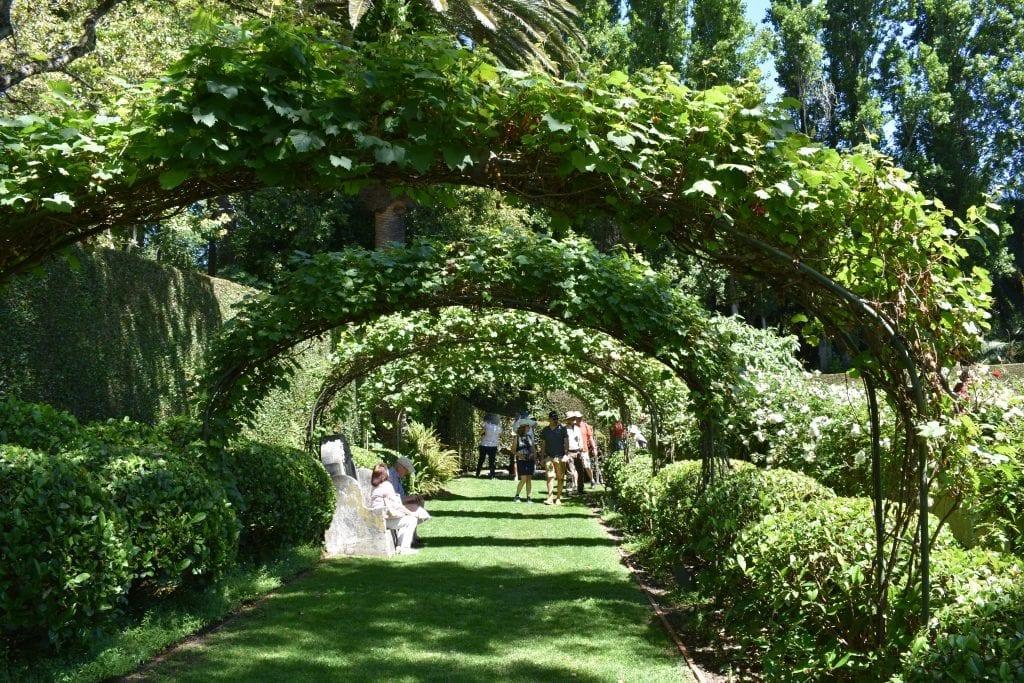 vine-walk-stellenberg-gardens