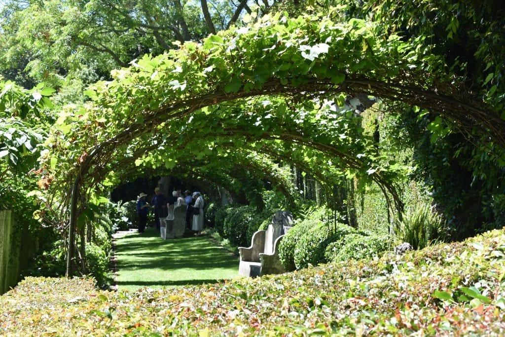 vine-walk-stellenberg-open-gardens-cape-town
