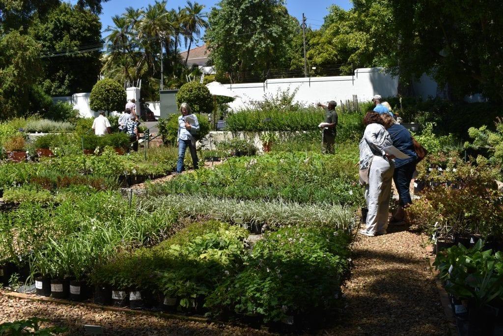 stellenberg-garden-nursery