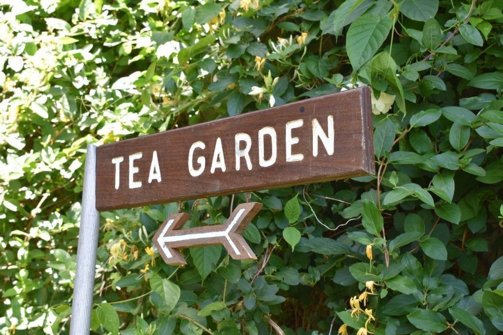 tea-garden-stellenberg