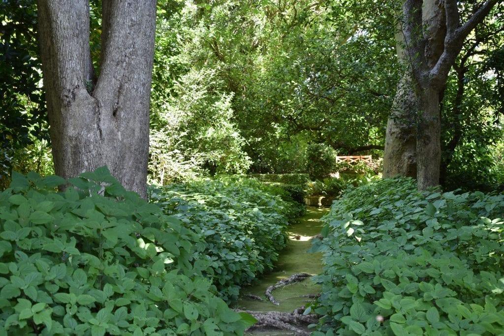 moss-walk-stellenberg-open-gardens