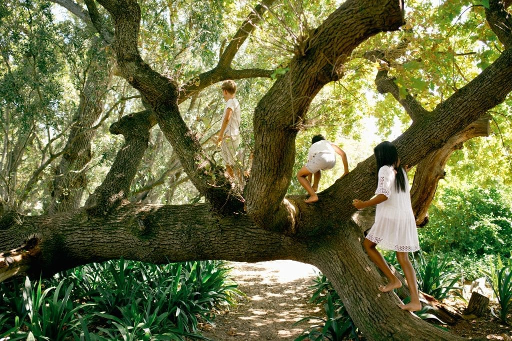 babylonstoren-gardens
