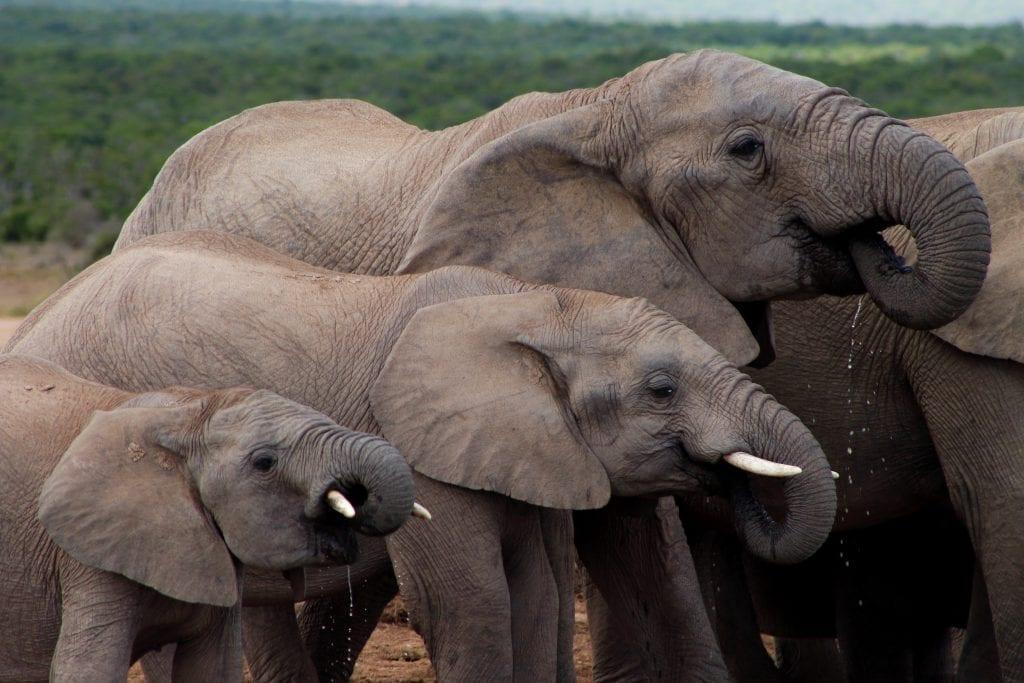 addo-elephant-park-alicia-chamaille