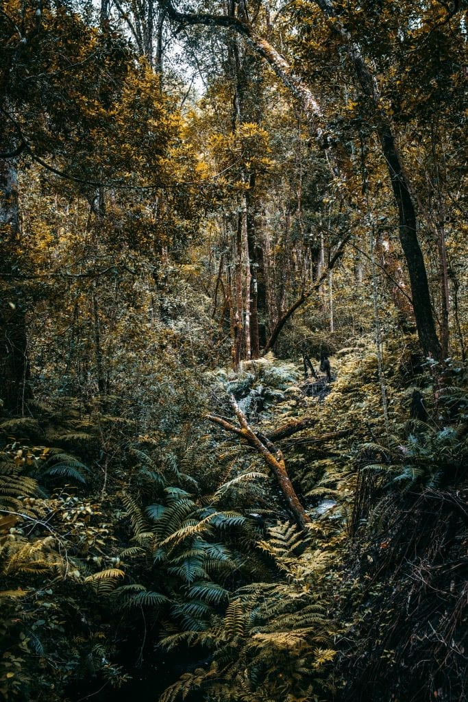 charl-van-rooy-knysna-forest