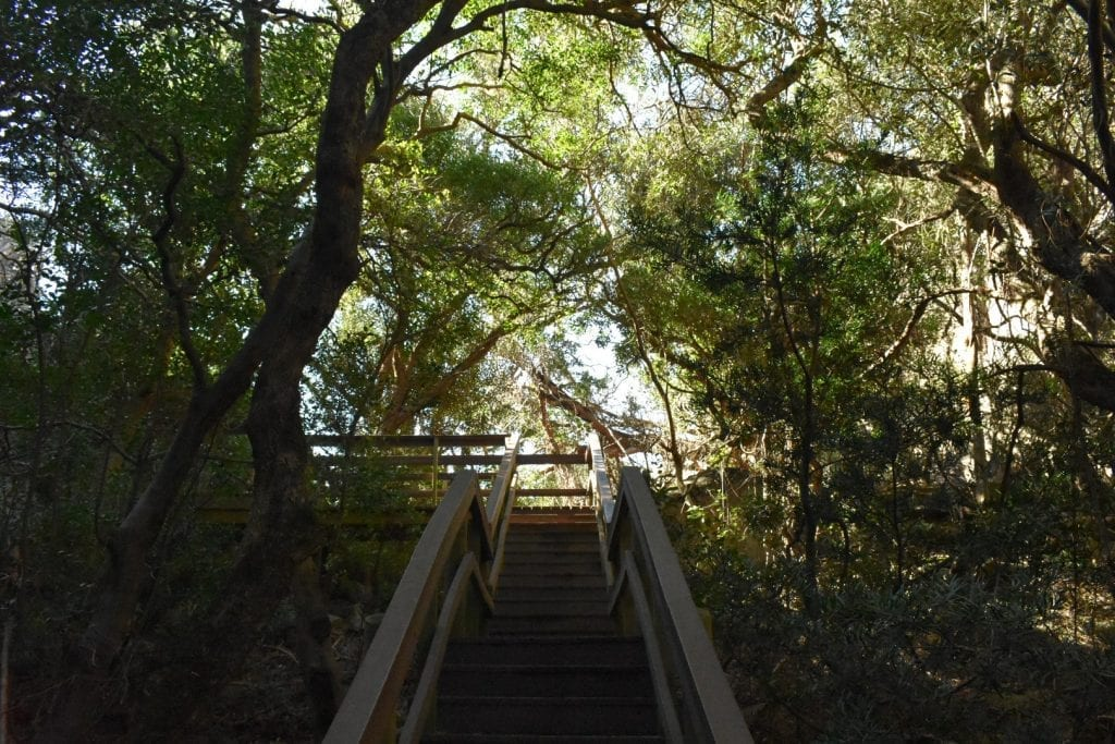 forest-walkway-paarl-mountain-nature-reserve