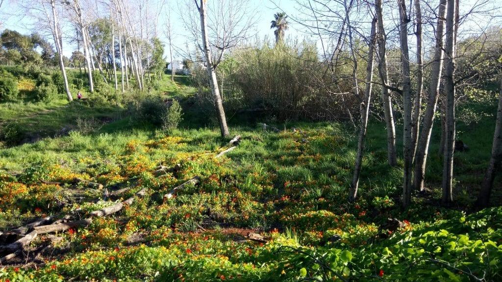 majik-forest-durbanville