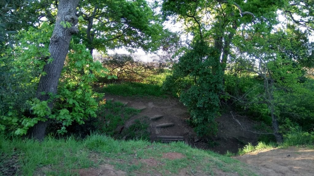 majik-forest-mtb-trail