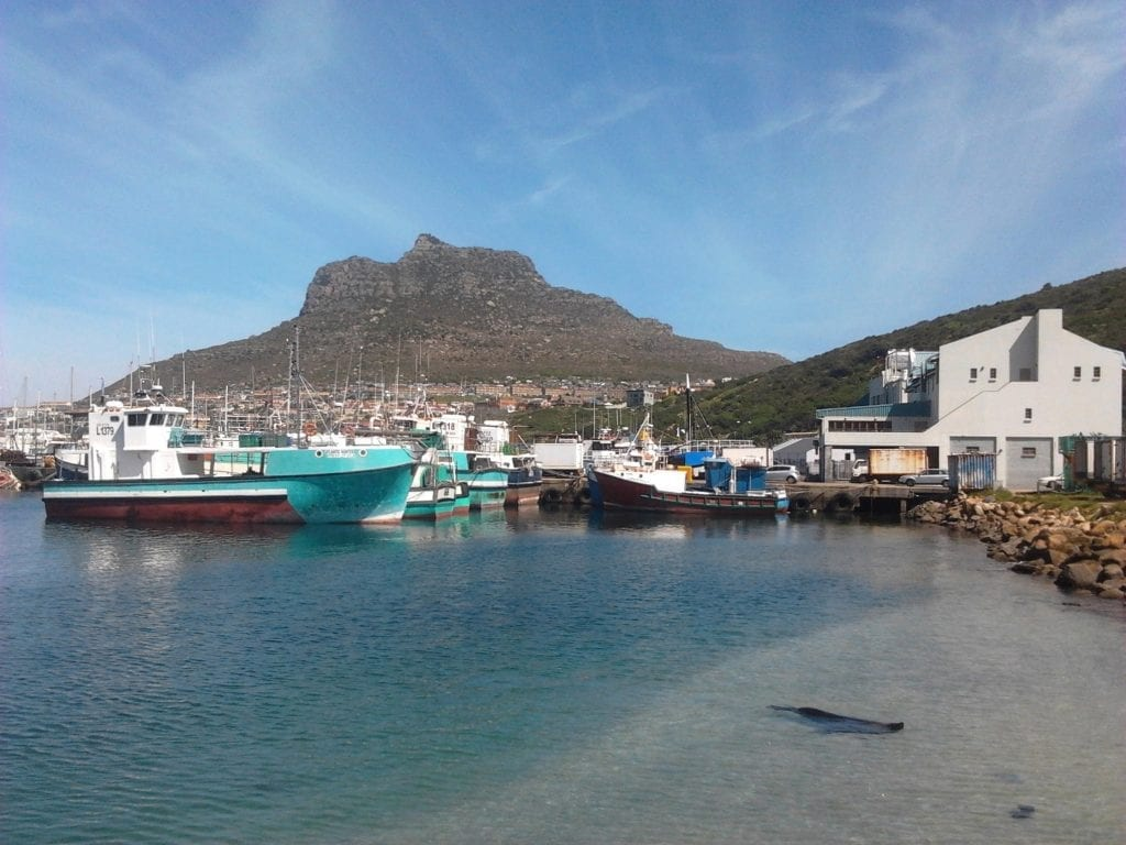 hout-bay-harbour-interesting-day-trips-cape-town