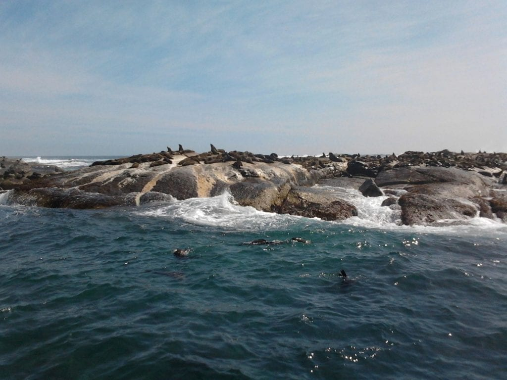 seal-island-hout-bay