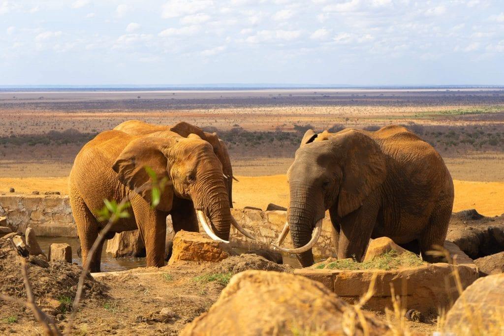 kenya-safari-book-it-lets-go