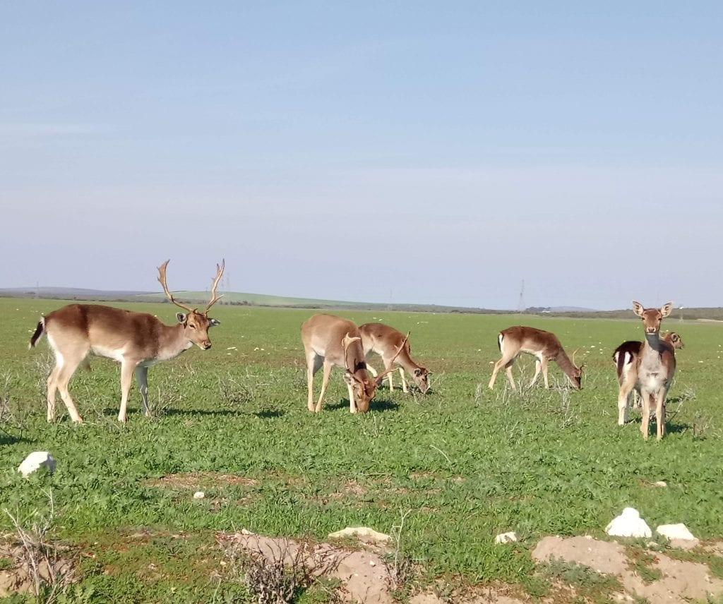 sable-antelope-thali-thali-game-lodge