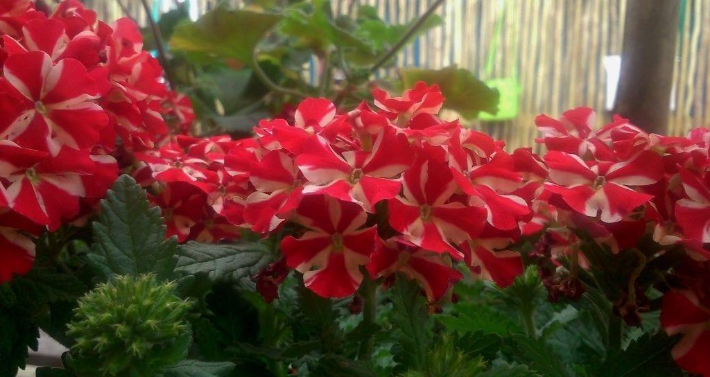 ozcf-market-potplants