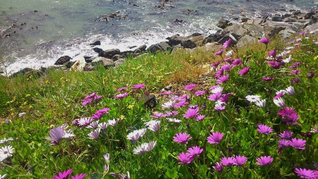 flowers-ocean-granger-bay