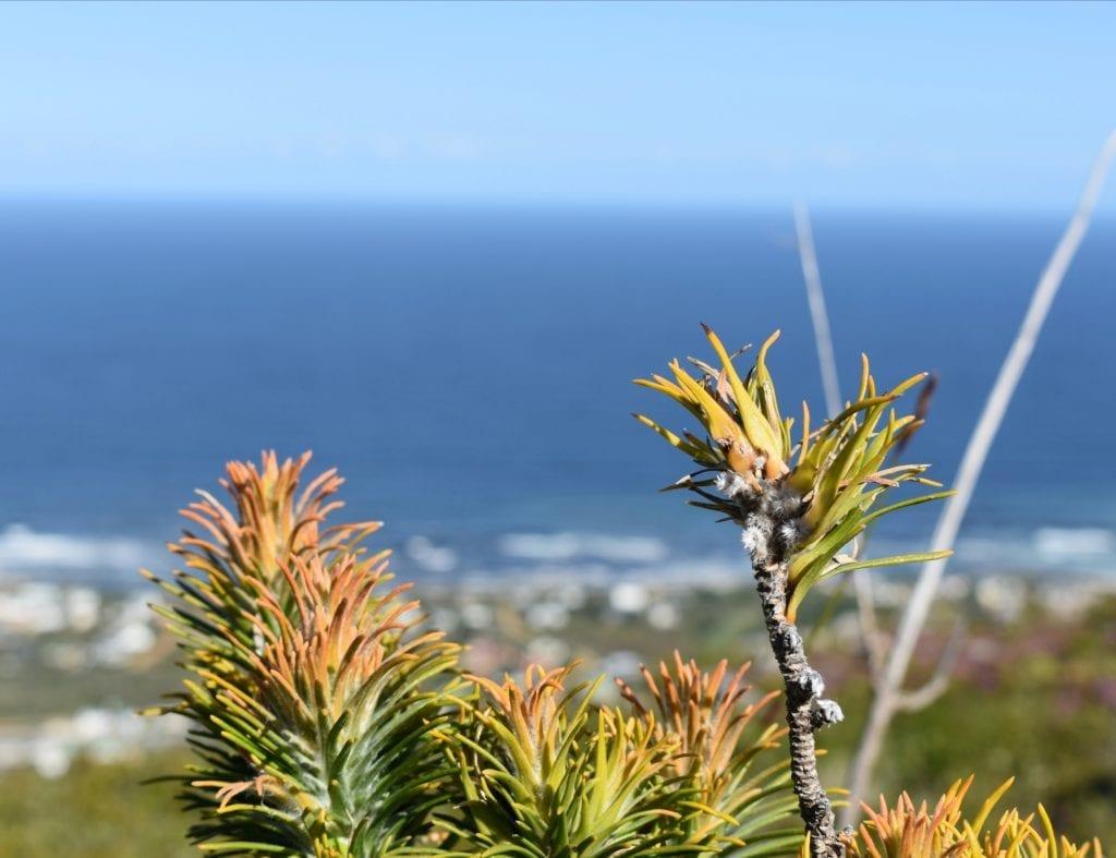 zigzag-fynbos-trails-vegetation
