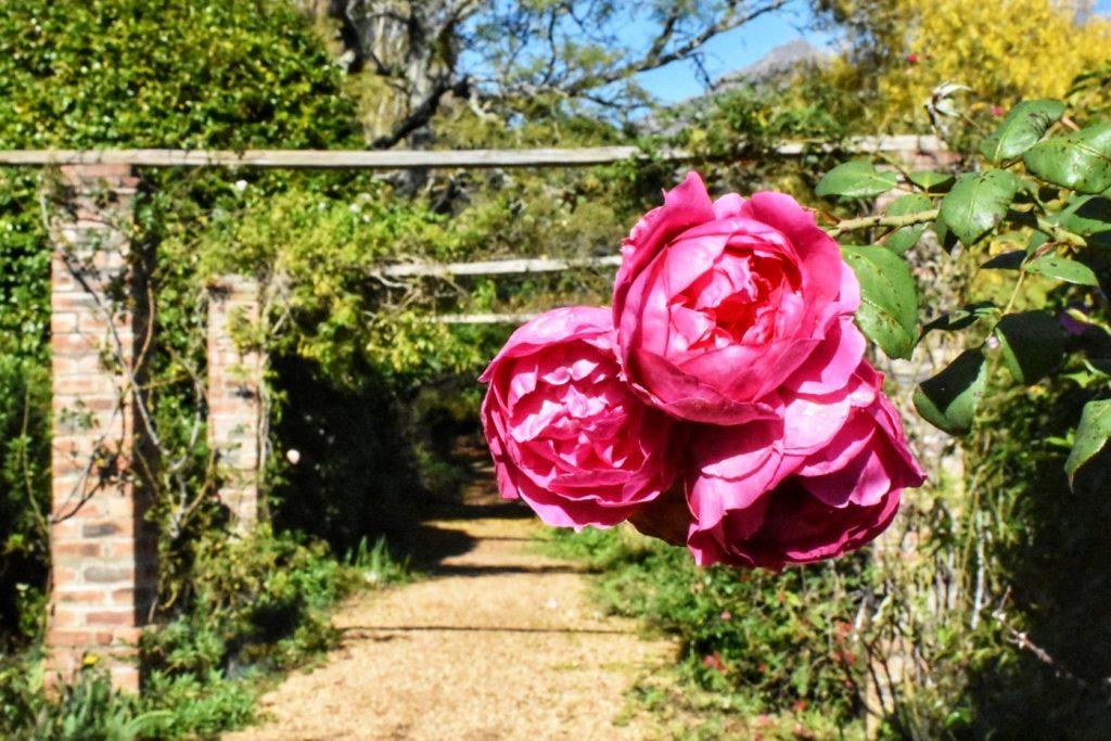 pergola-garden-old-nectar