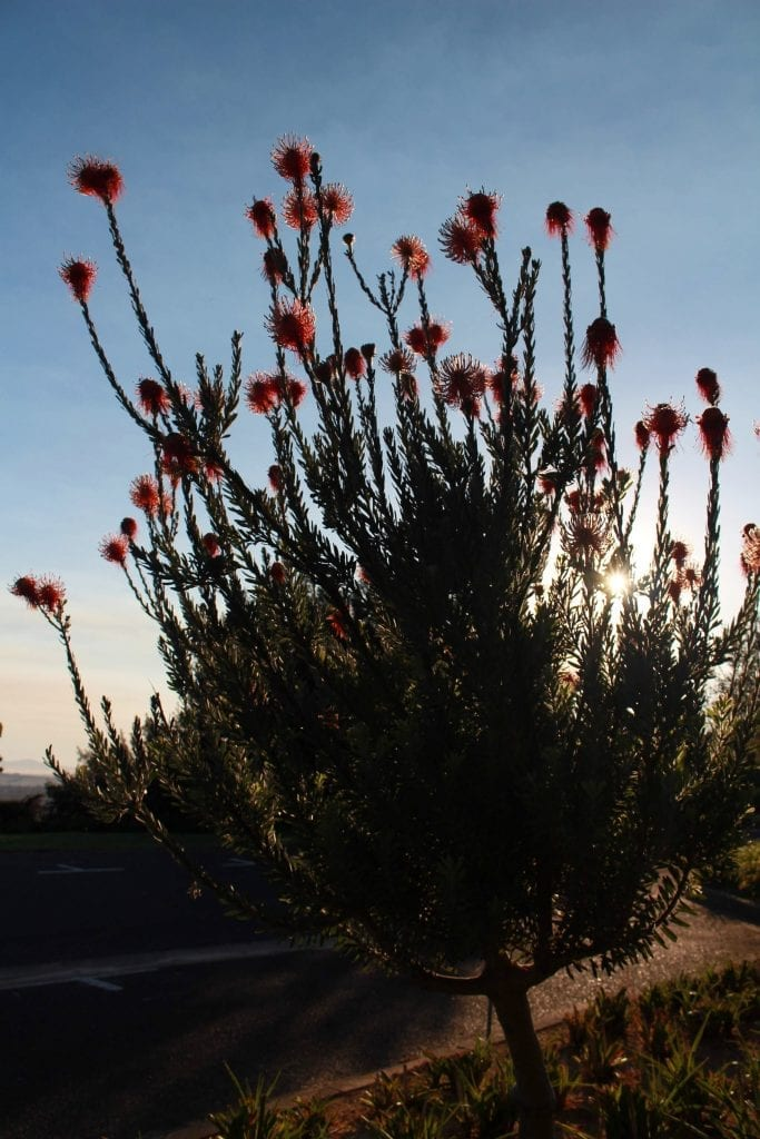 proteas-taal-monument