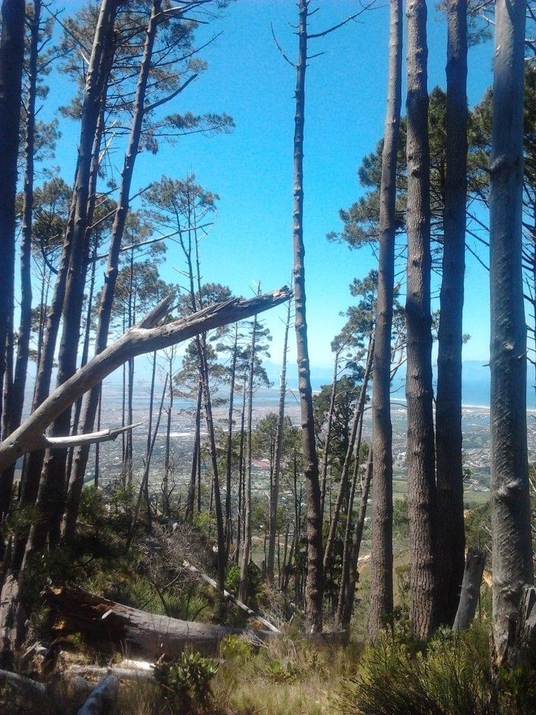 pine-forest-silvermine
