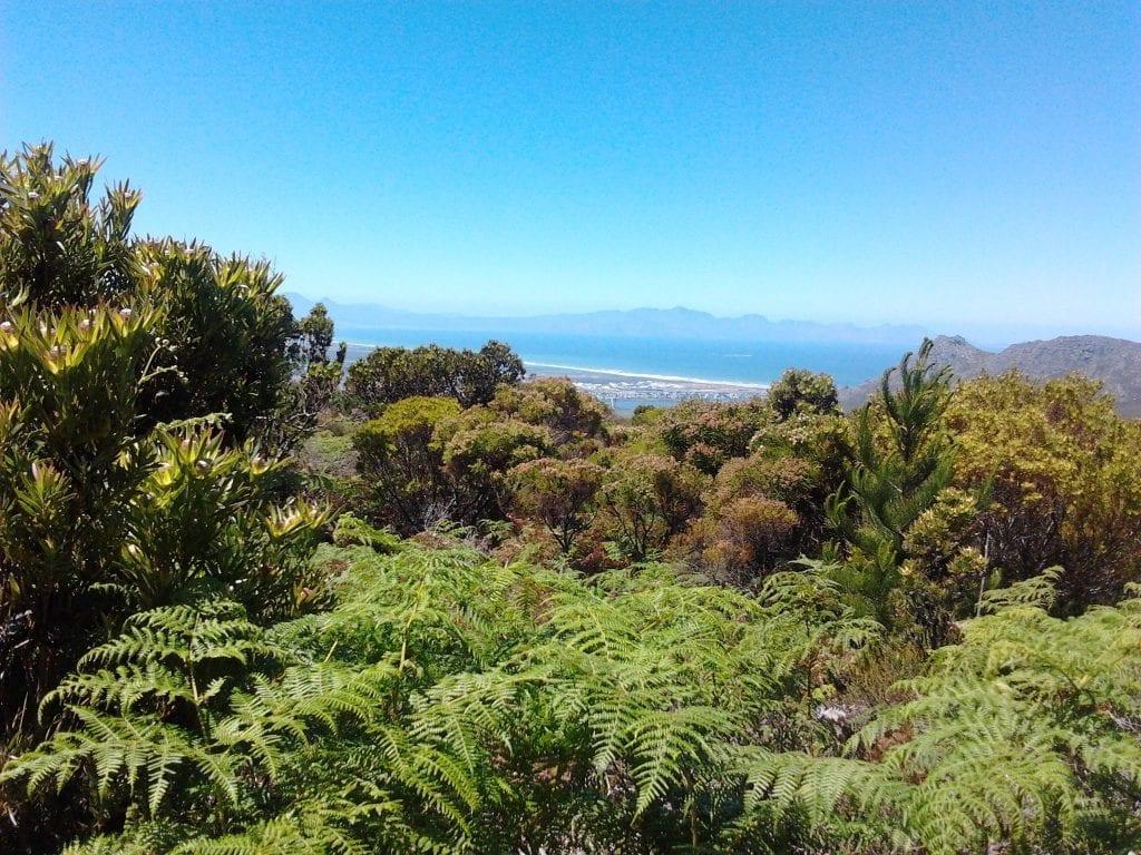 silvermine-nature-reserve