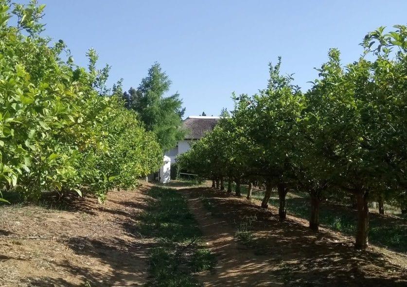 mariannes-wines-stellenbosch