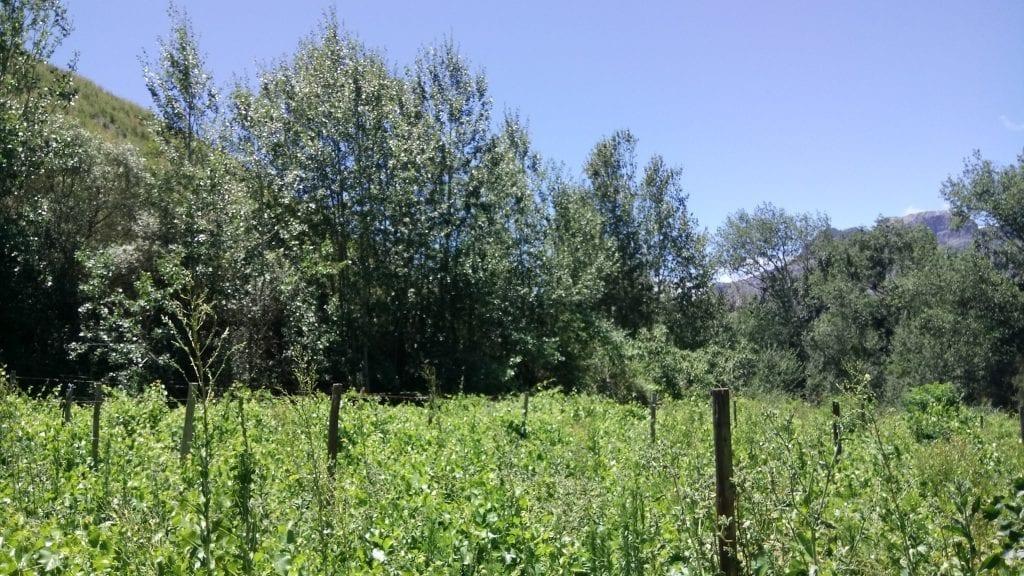 overgrown-vines-welvanpas