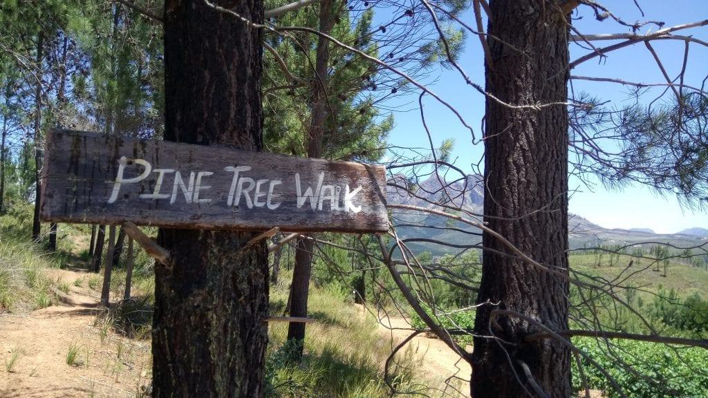 pine-tree-walk-welvanpas-hike