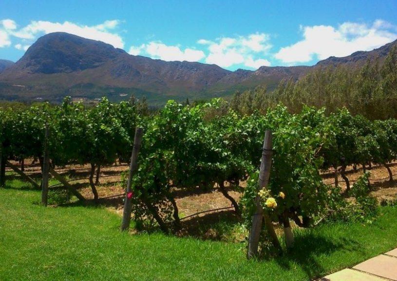 holden-manz-vineyards