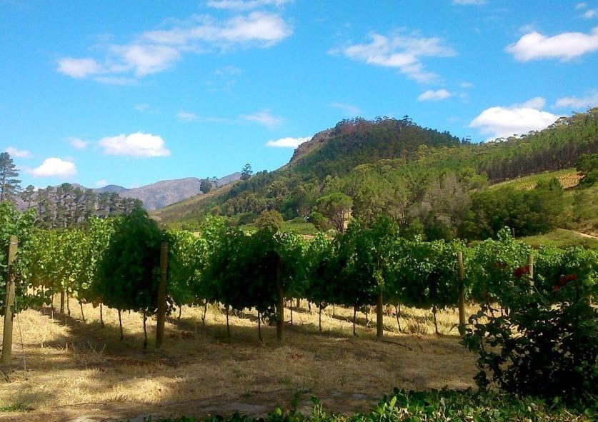 rickety-bridge-vineyards-franschhoek