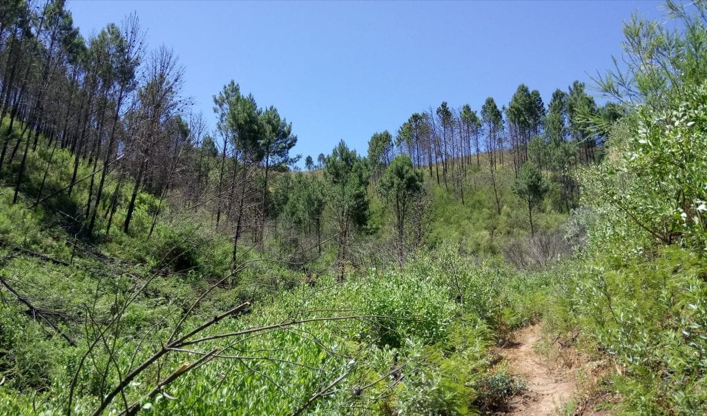 pine-forest-welvanpas-hike