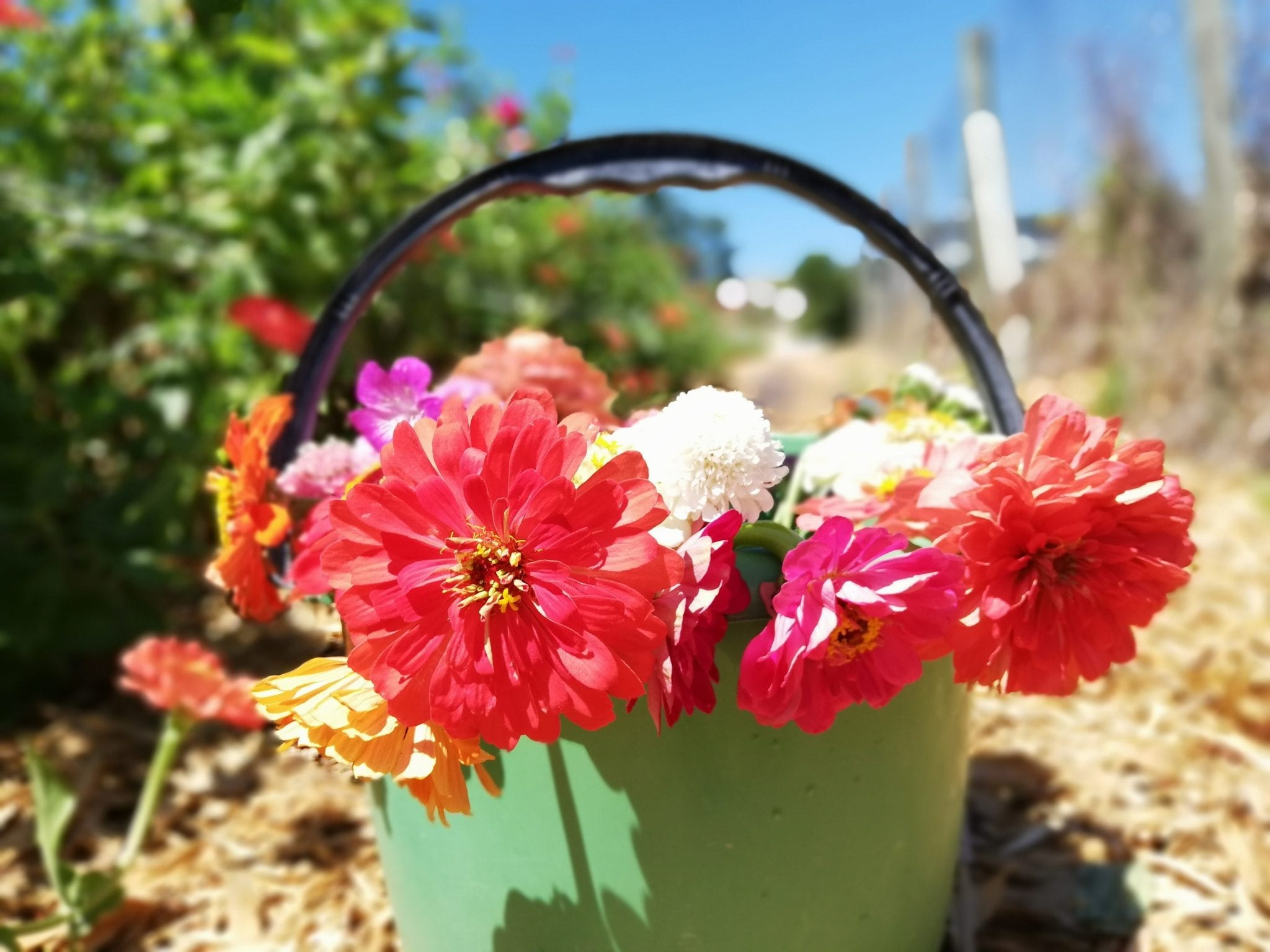 solo-travel-western-pick-your-own-flowers