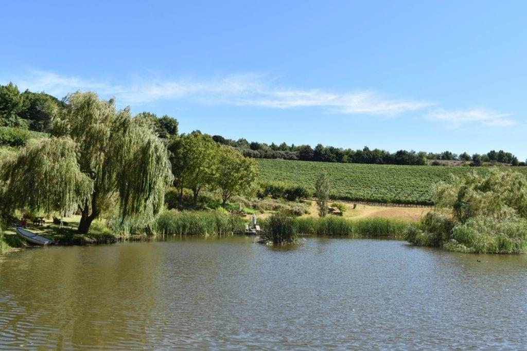 alluvia-boutique-winery-day-trips-cape-town
