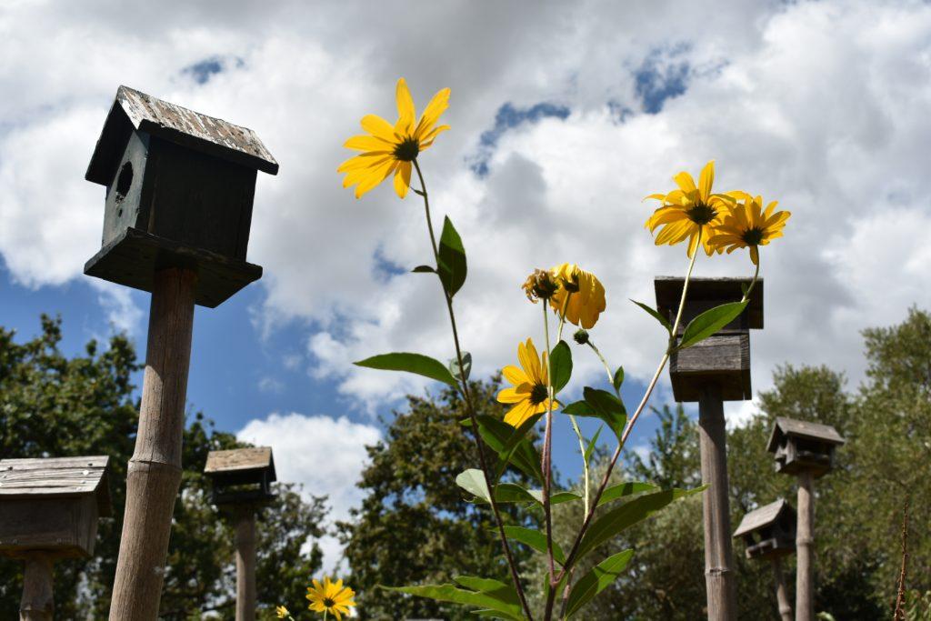 garden-nests