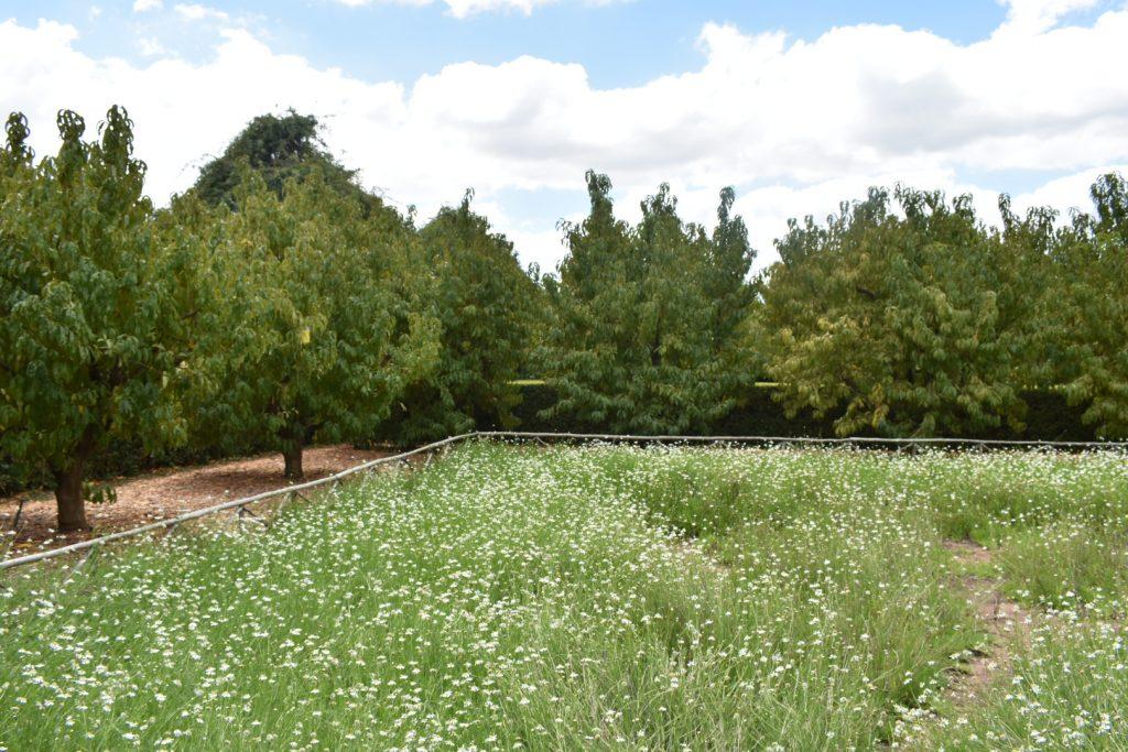 babylonstoren-field
