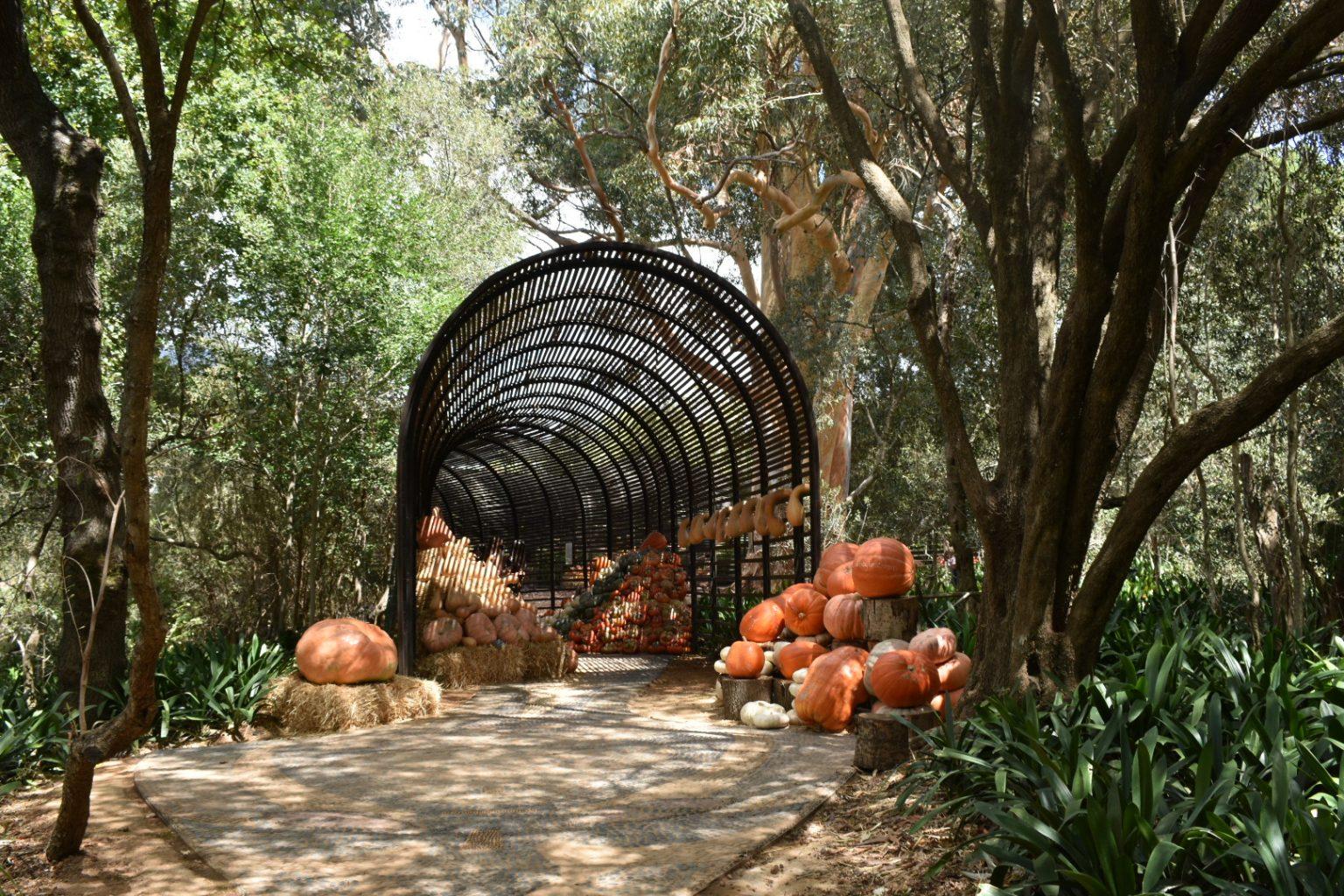 puff-adder-tunnel-babylonstoren-wine-farm-visit