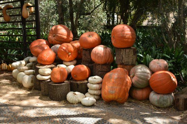 babylonstoren-wine-farm-visit