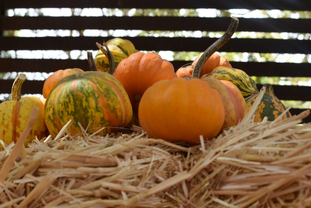 tiny-pumpkins