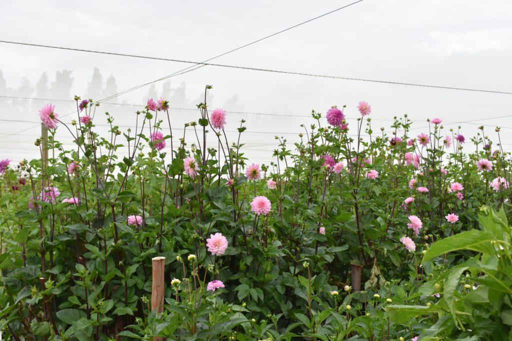 adene's-farm-flowers-greenhouse