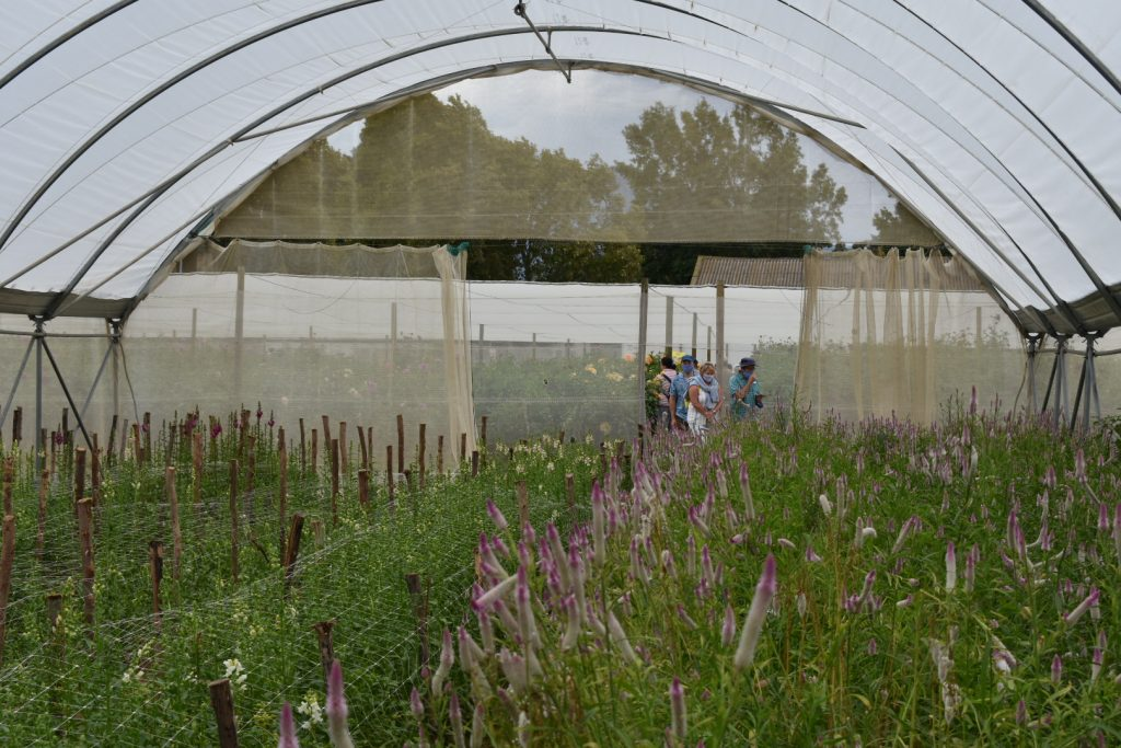 visiting-open-days-adene's-farm-flowers