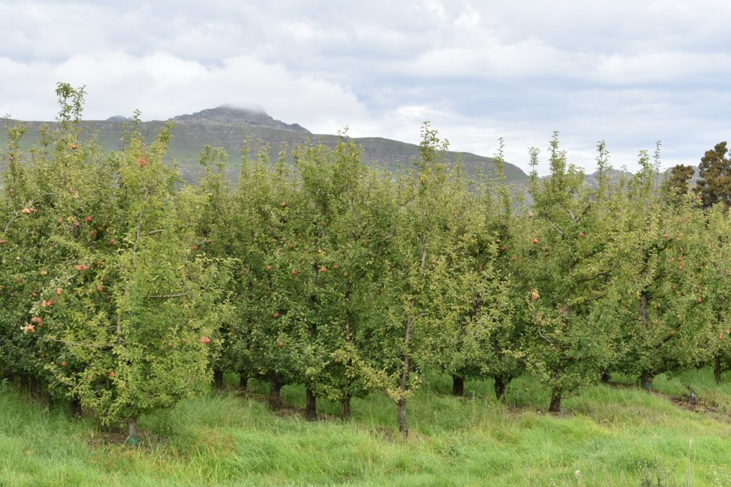 platvlei-fruit-farm