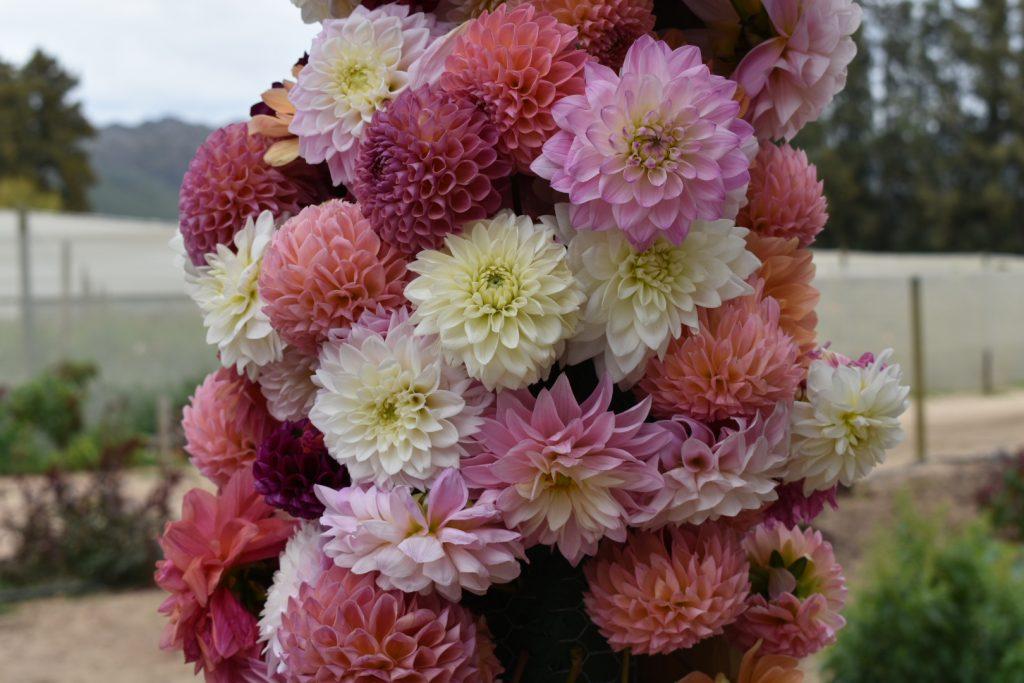 order-flowers-adenes-farm-flowers