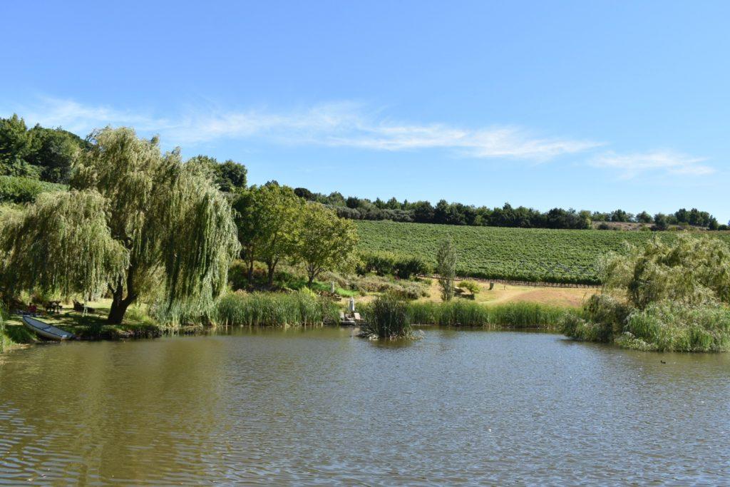 alluvia-boutique-winery-picnics