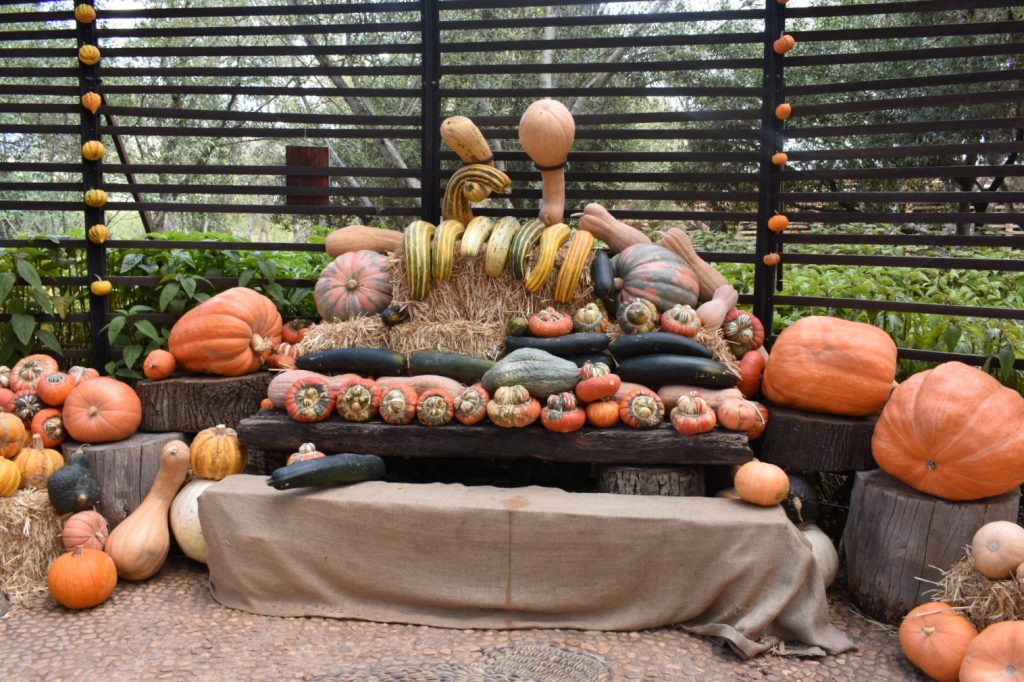 pumpkin-display-babylonstoren-wine-farm