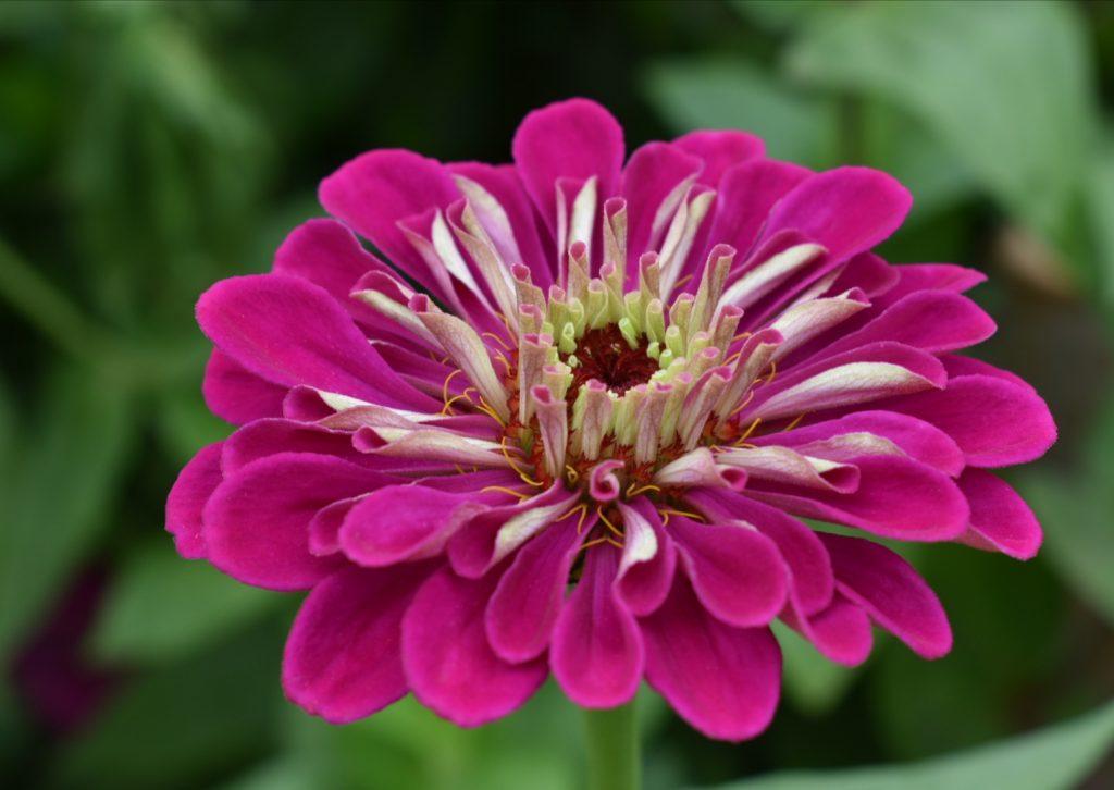 adene-farm-flowers-western-cape-south-africa
