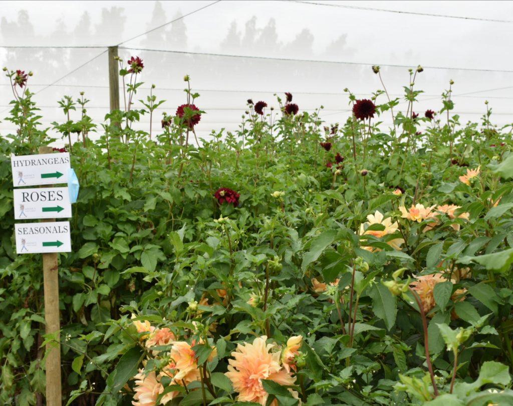 adenes-farm-flowers-garden-signs