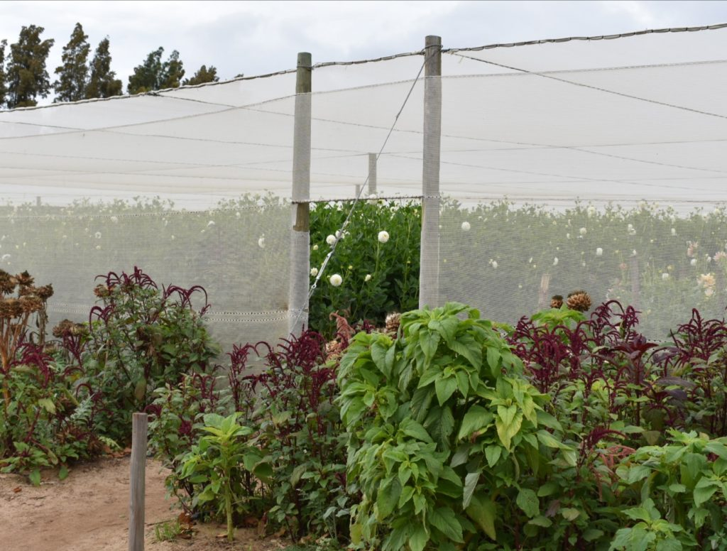 flower-farm-entrance