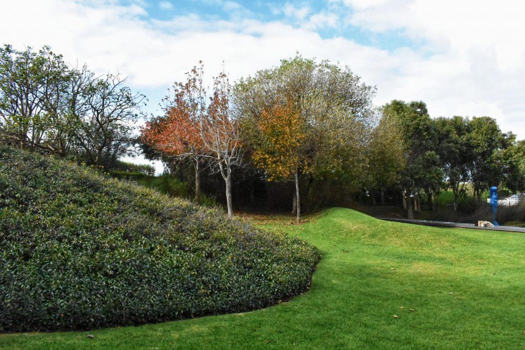 steenberg-estate-gardens